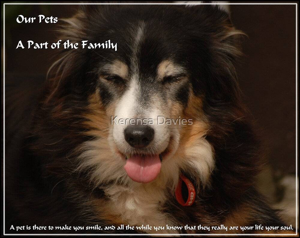 Our Pets, A part of the Family by Kerensa Davies