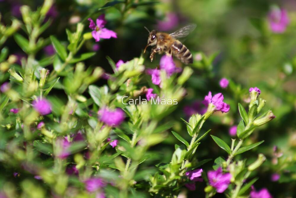 Buzzy Bee by Carla Maas