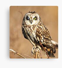 owl  beautiful animal ! beautiful product for owls  lovers Canvas Print