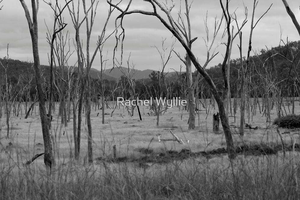 Dead Wood by Rachel Wyllie