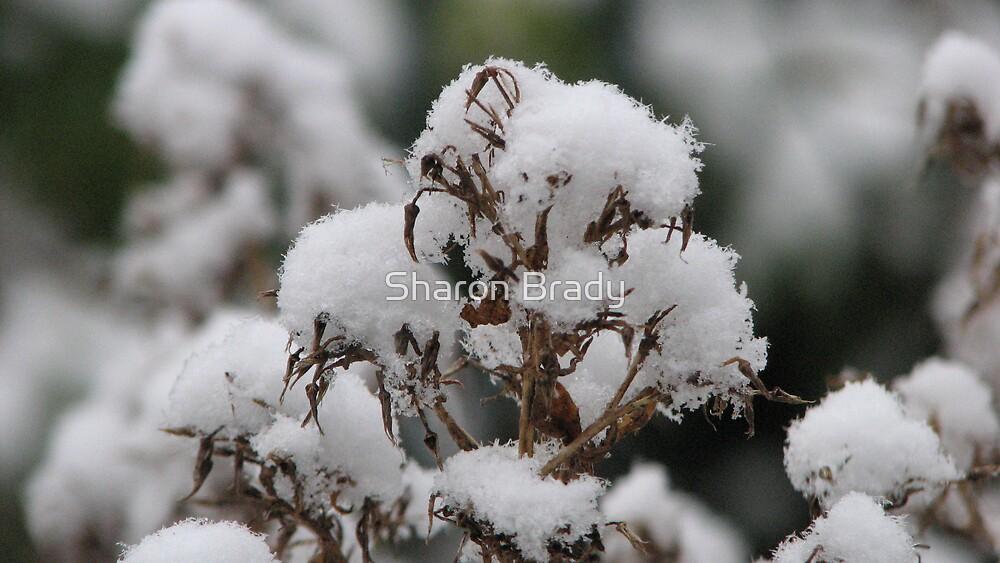 Snow by Sharon Brady