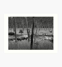Mustering Cattle Art Print