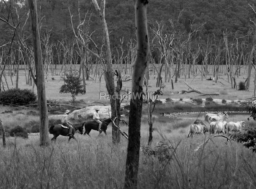 Mustering Cattle by Rachel Wyllie
