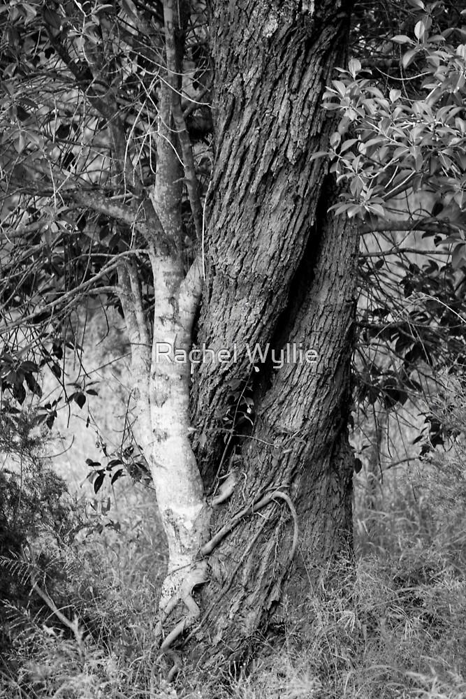 Twisted Tree by Rachel Wyllie