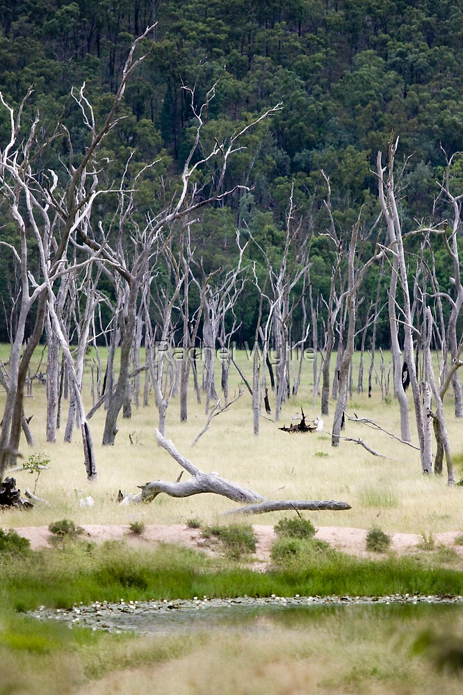 Dead Trees by Rachel Wyllie