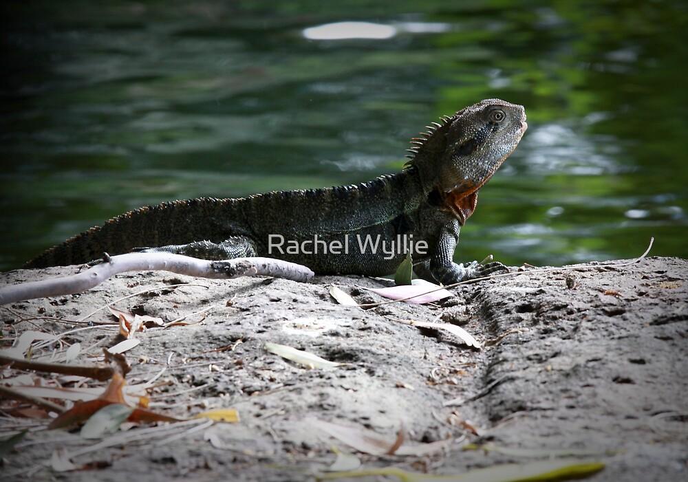 Reptile Rock by Rachel Wyllie