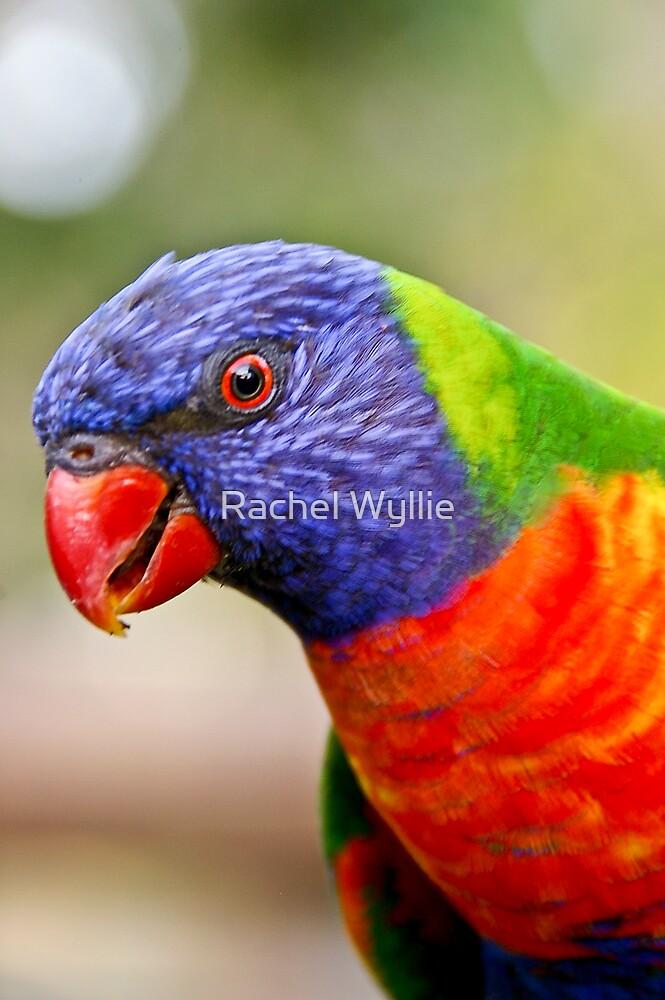 Cheeky Parrot by Rachel Wyllie