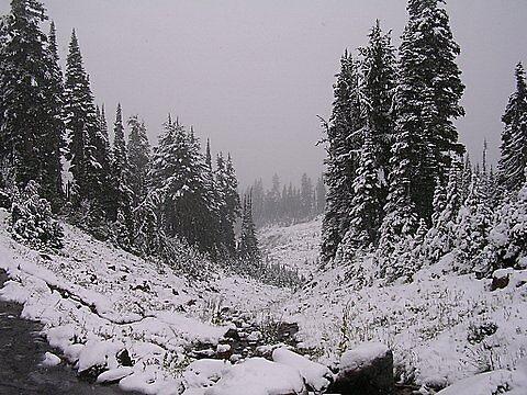 Mt. Rainier by Halcyonclaire