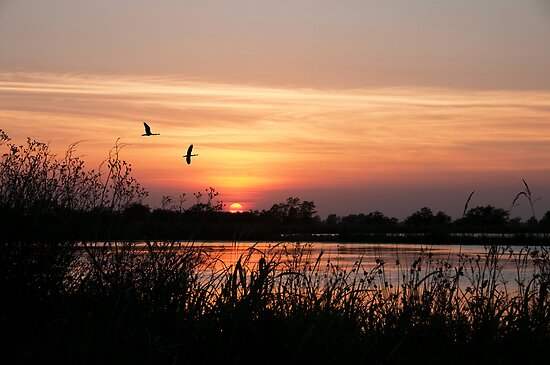 Sun Setting on a Louisiana Rice Field by Bonnie T.  Barry