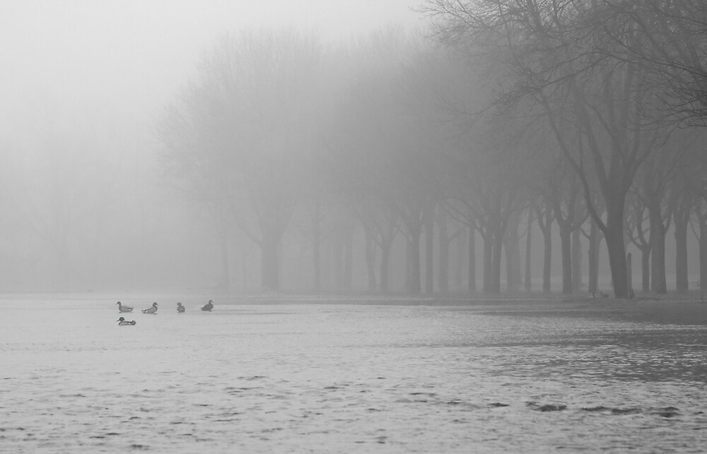 Currie Park by DavidHoefer