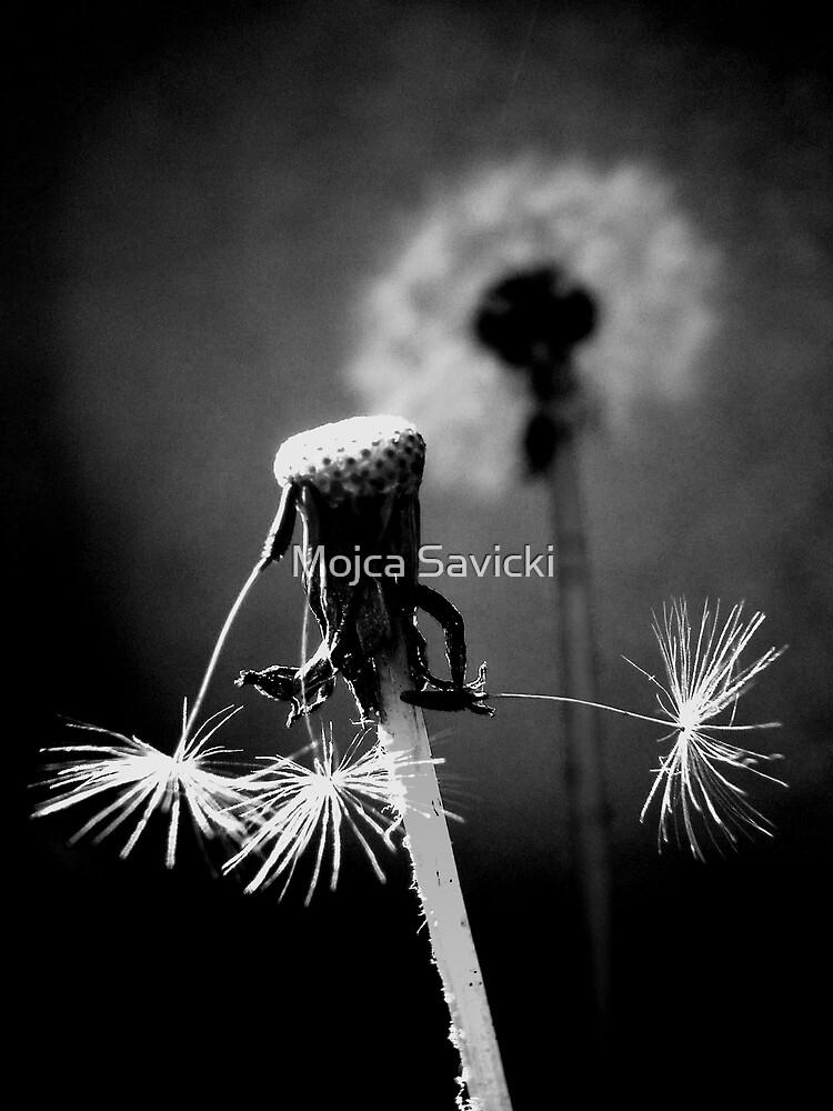 Almost gone  by Mojca Savicki