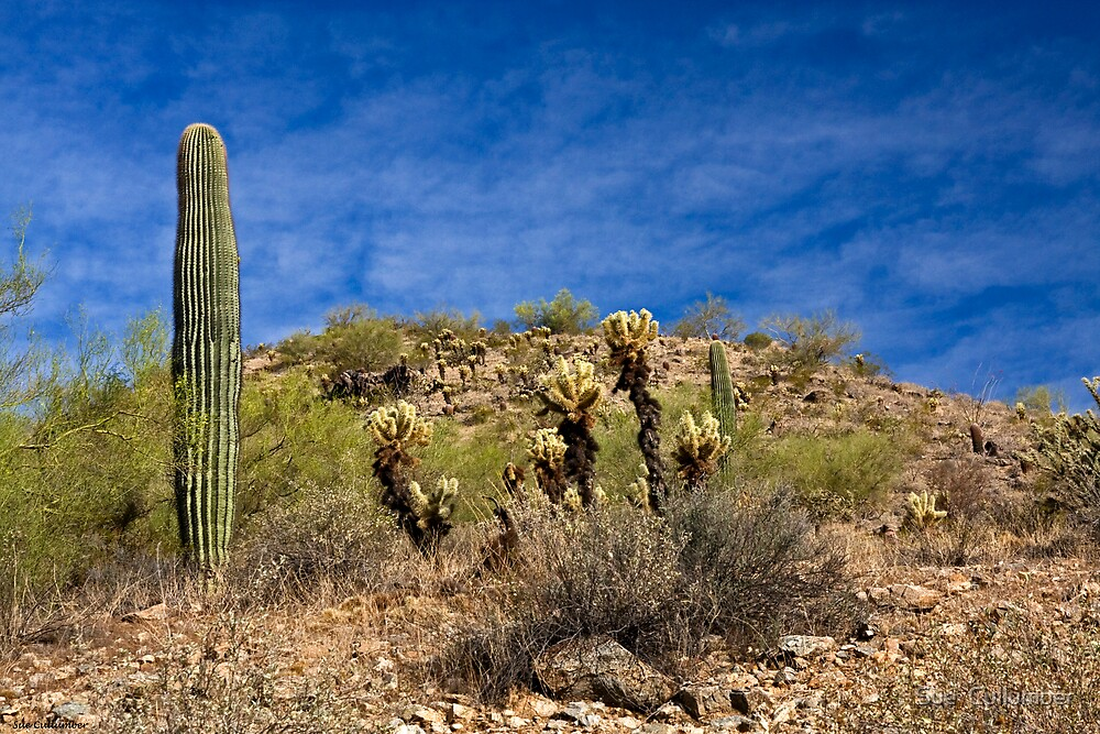 Desert Contrasts by Sue  Cullumber
