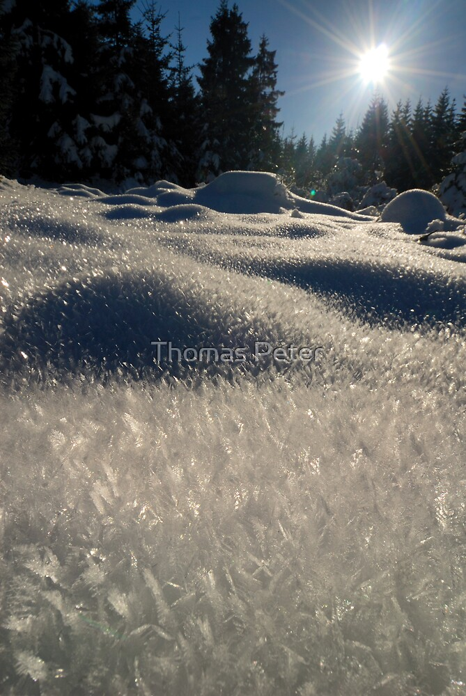 Winter in Black Forest by Thomas Peter