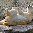 polar play by jaffa