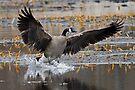 Landing by JimGuy