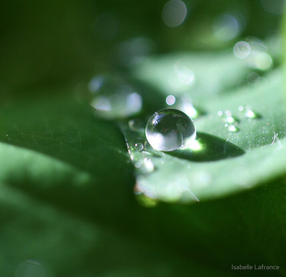 Green sparkle by Isabelle Lafrance