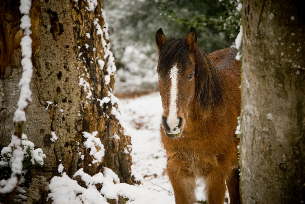 New Forest pony in the snow by tristanmillward