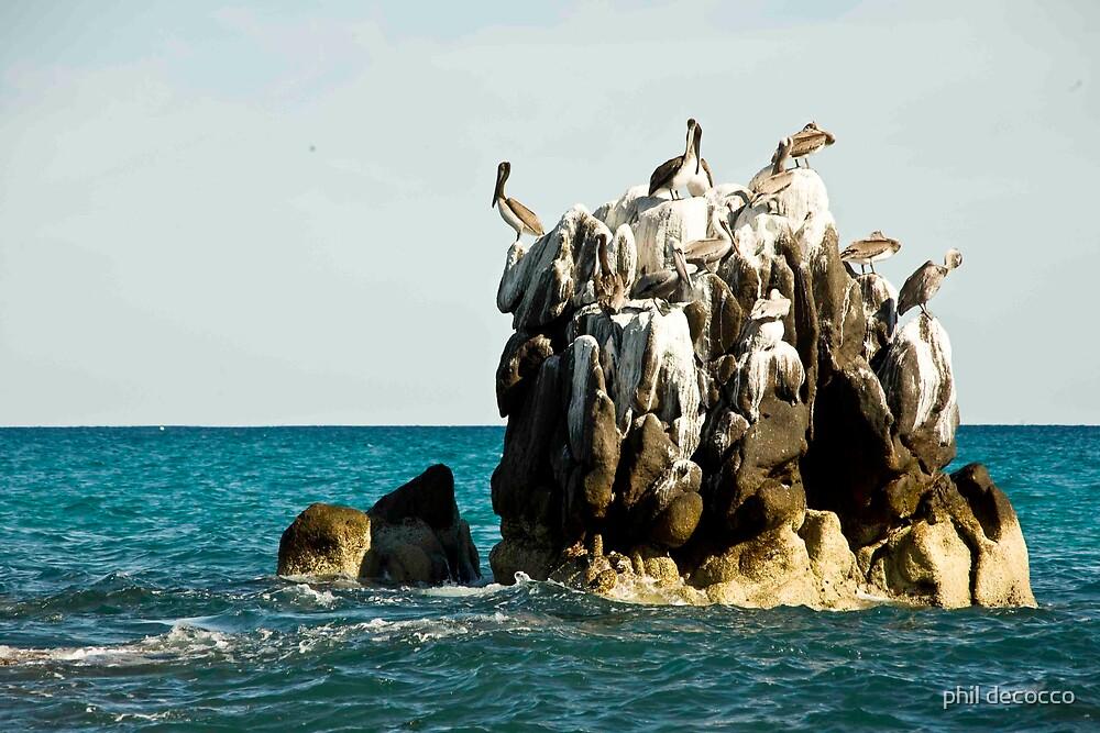 Pelican Doo Rock by phil decocco