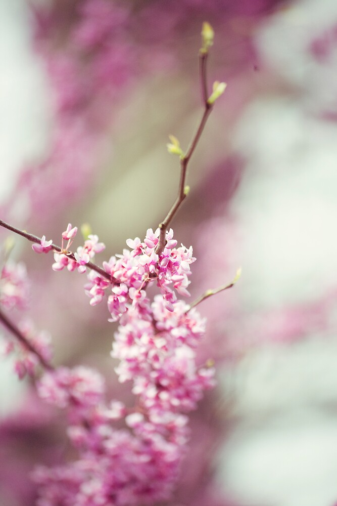 Pink Blossoms by AndreaMcClain