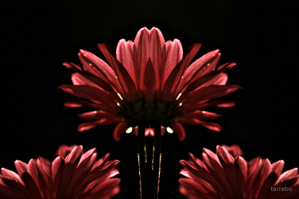 Red Flower in Light by terrebo