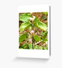 Blushing Trillium Greeting Card