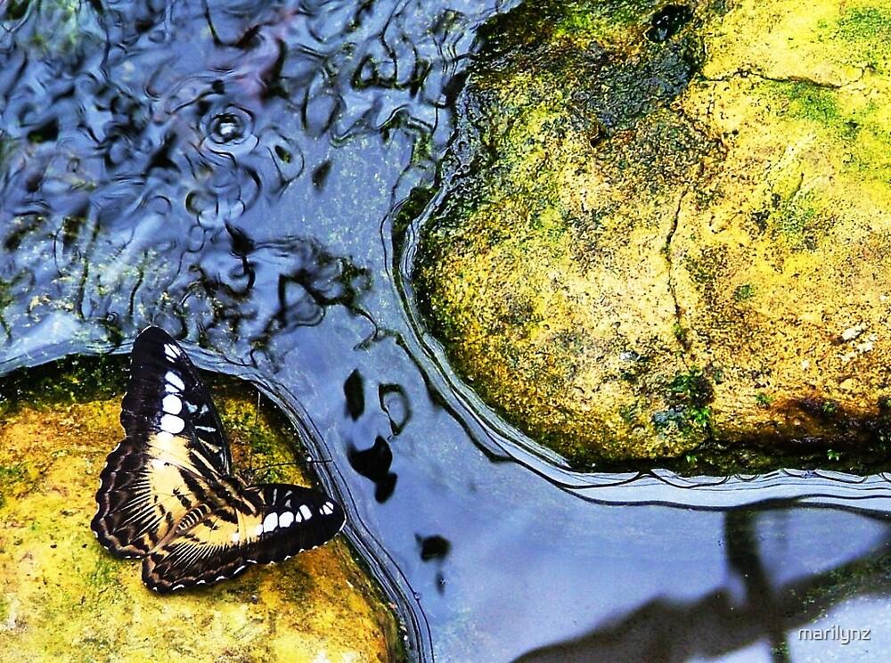 Butterfly on Rock  by marilynz