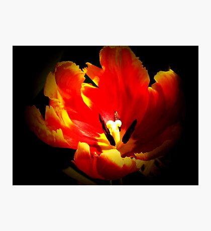 When It Burns Like Fire  Photographic Print