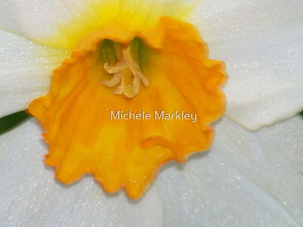 Daffodil by Michele Markley
