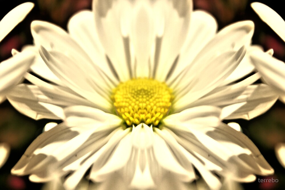 Daisy by terrebo