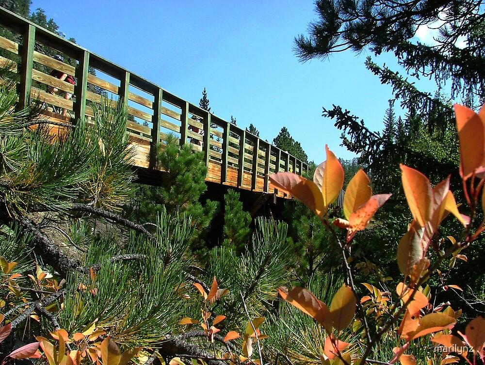 Mickelson Trail Bridge by marilynz