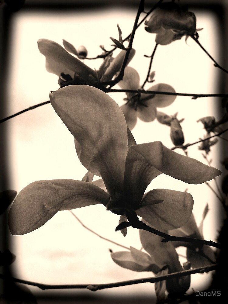 My Own Magnolia by DanaMS
