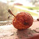 Rotten Apple by gagman