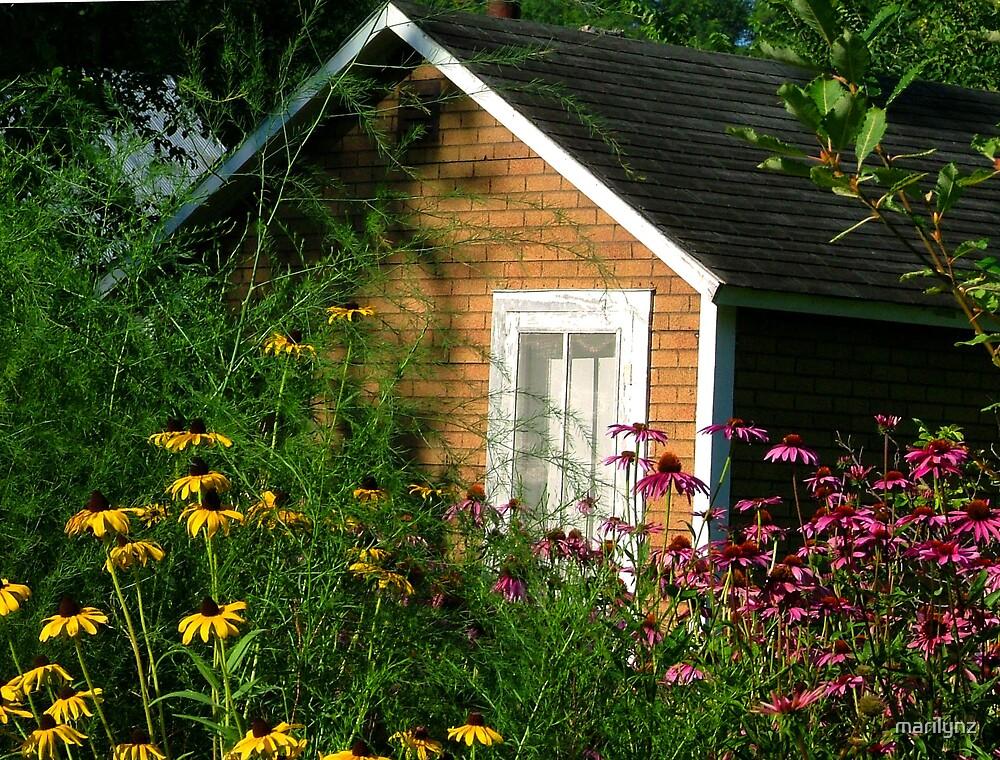 echanacea garden  by marilynz