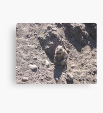Fat Groundhog Canvas Print