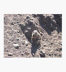 Fat Groundhog Photographic Print