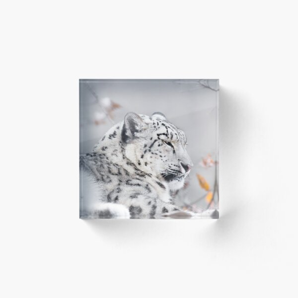 Snow Leopard Acrylic Block