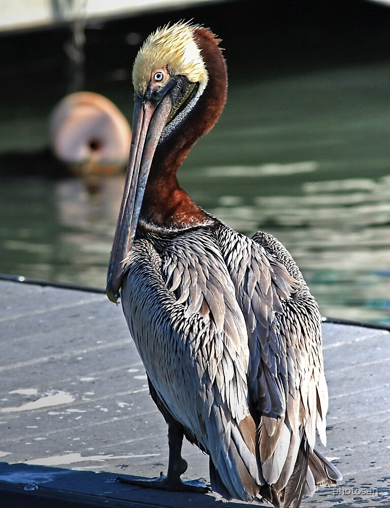 Pelican Colors by photosan