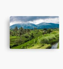 Bali Rice fields, Indonesia Canvas Print