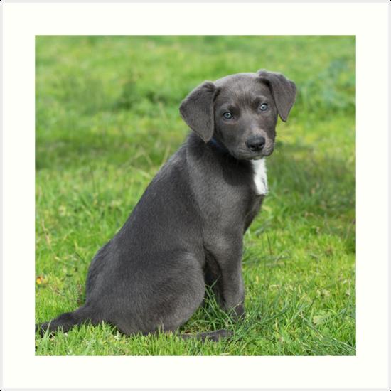 Grey Puppy by diamonddove