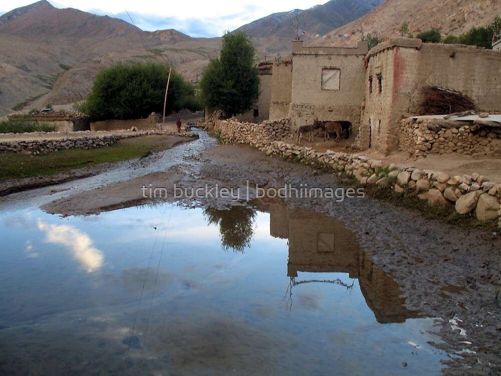 village stream. ladakh, northern india by tim buckley | bodhiimages