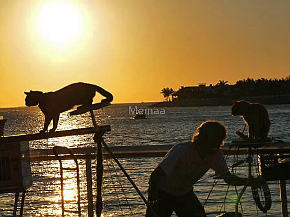Key West's Performing Cats In the Sunset by Memaa