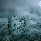 Frosty moonlit night by Brian Tarr