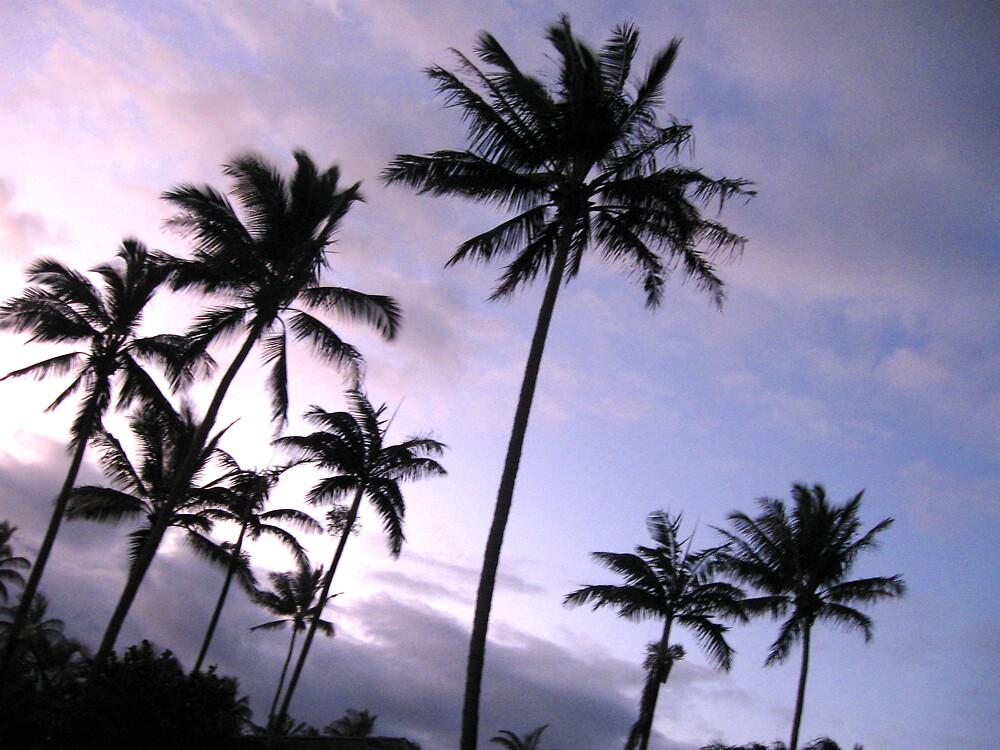 sunset palms by Marda Bebb