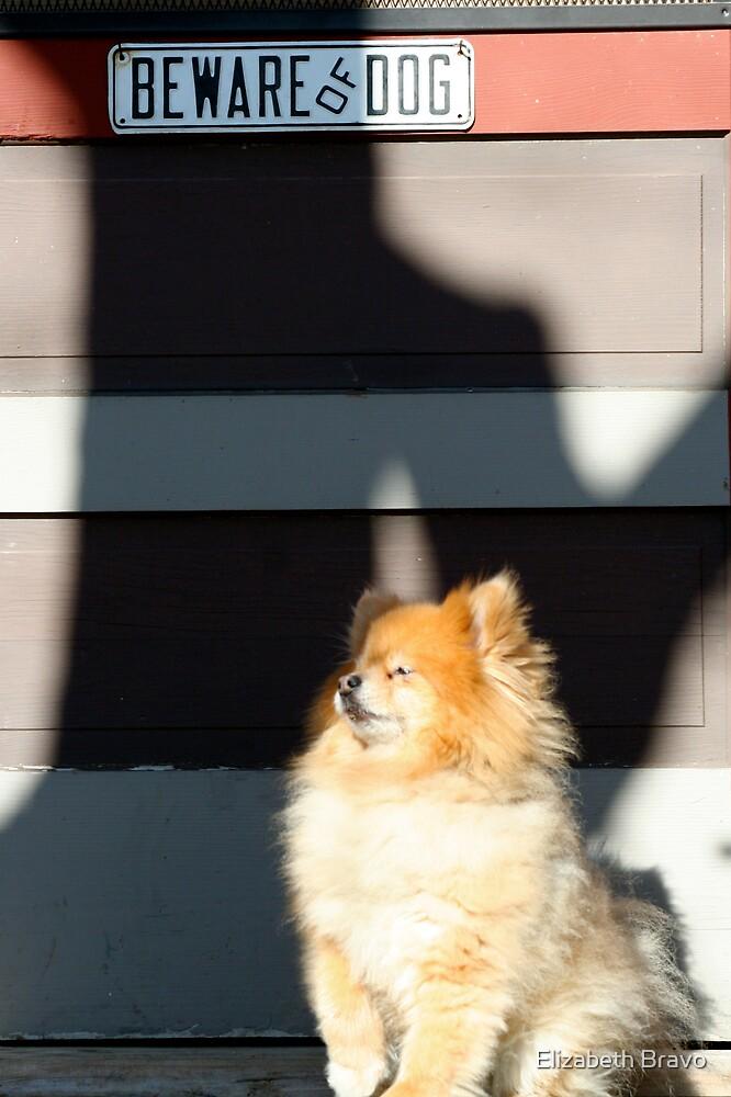 Beware of Dog by Elizabeth Bravo