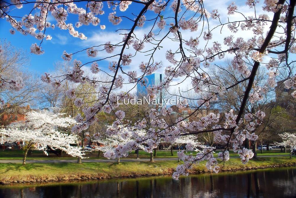 Cherry Blossom over blue sky by LudaNayvelt