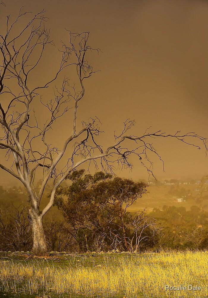 Dust storm ... Cootamundra by Rosalie Dale