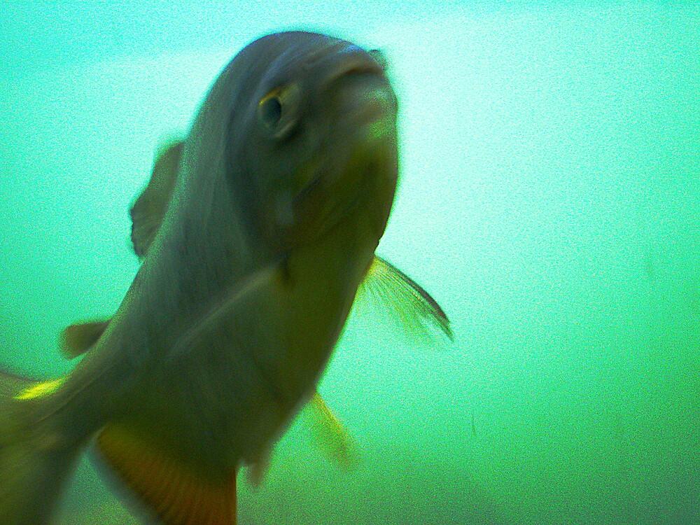 Hey fishy by rockko