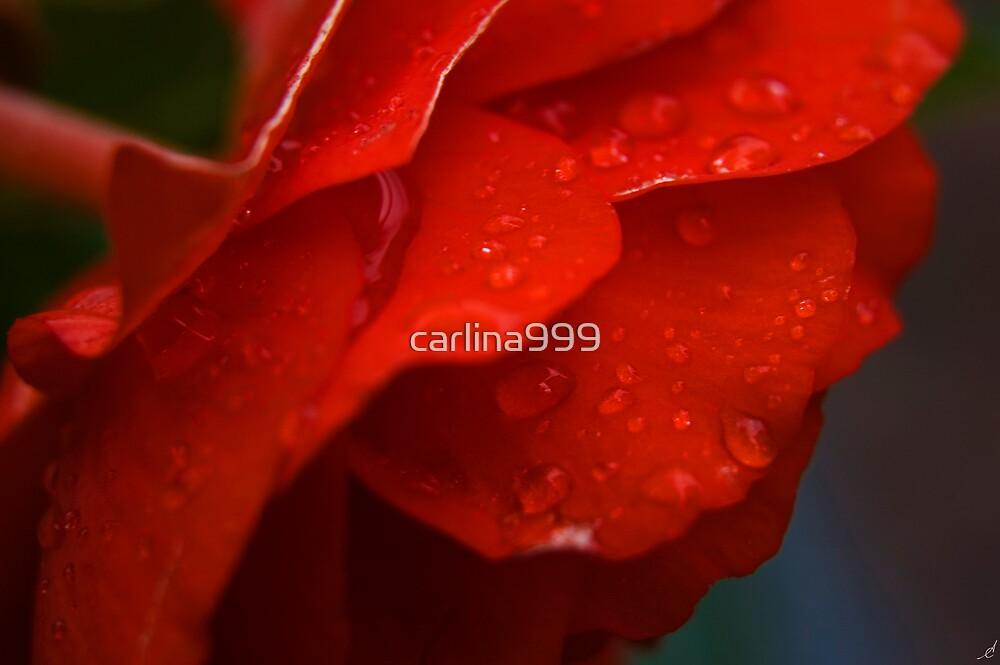 Spring Flower IV by carlina999