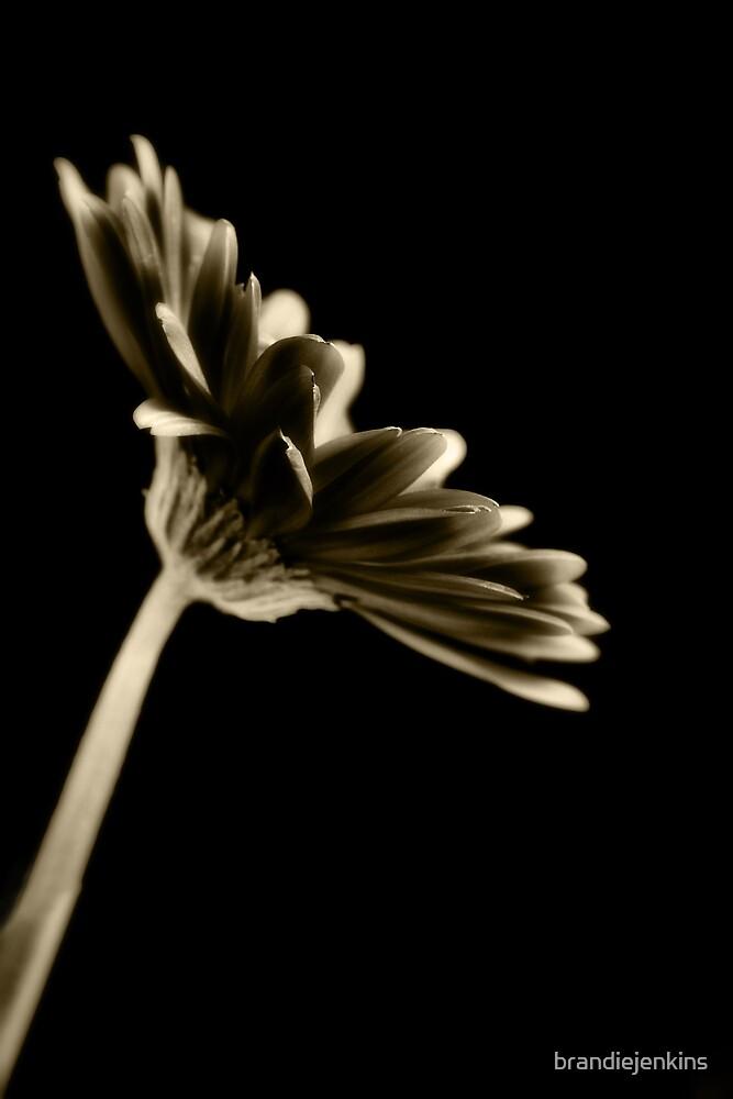 Simplicity by brandiejenkins