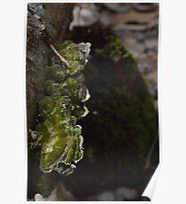 Moss on the Mushroom Poster